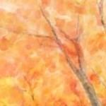 秋の風景 -Illustration-